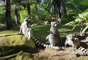 สวนสัตว์ Bioparc Fuengirola